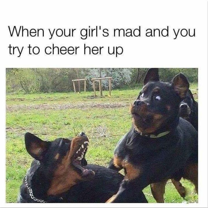 101 Best Funny Dog Memes To Make You Laugh All Day Funny Dog Memes Dog Memes Funny Dogs