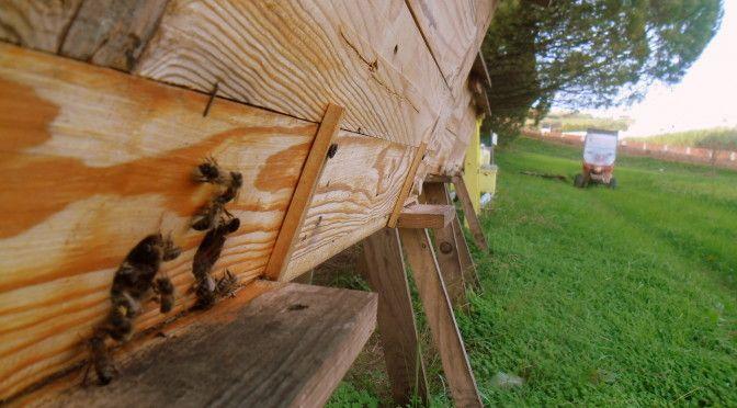 Características de um bom apiário para Abelhas