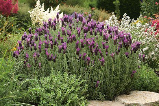 Muggenwerende planten-natuurvriendelijk en een aanwinst voor je tuin, keuze genoeg uit planten waar muggen graag op afstand voor blijven