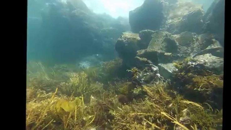 Saltwater Eco Adventure Snorkel, Tawharanui, Auckland New Zealand