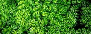 Resultado de imagen de texturas visuales