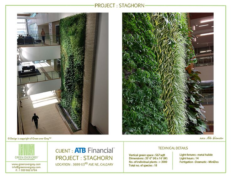 10 best green walls images on pinterest for Green wall vancouver