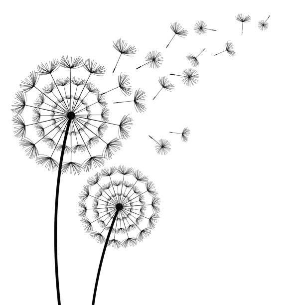 Black Dandelions With Flying Fluff On White Background Vector Art Illustration Dandelion Art Dandelion Vector Art Illustration