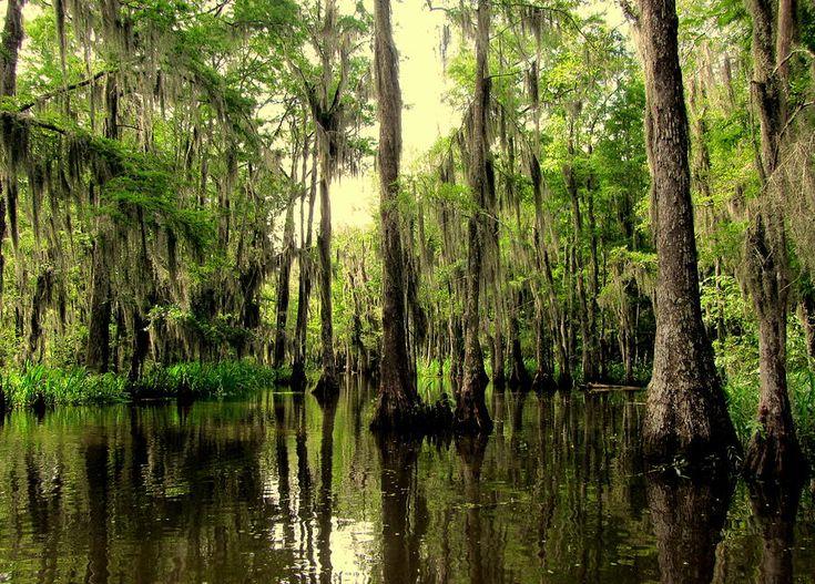movies in bayou vista la
