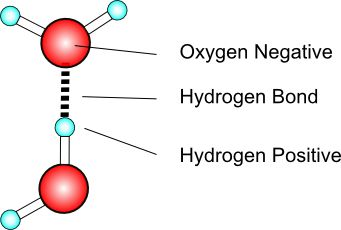 Hydrogen bond is a type of electrostatic interaction between electronegative (fluorine, nitrogen, or oxygen) atoms in one molecule and hydrogen atoms bound to electronegative atoms in another molecule. In the water molecule the oxygen atom attracts the electrons in the O–H bonds.