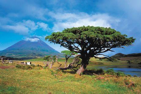 Descubre Azores y Madeira a precios únicos! - Ofertas viajes Escapadas fin de semana de novios Agencia Girovol