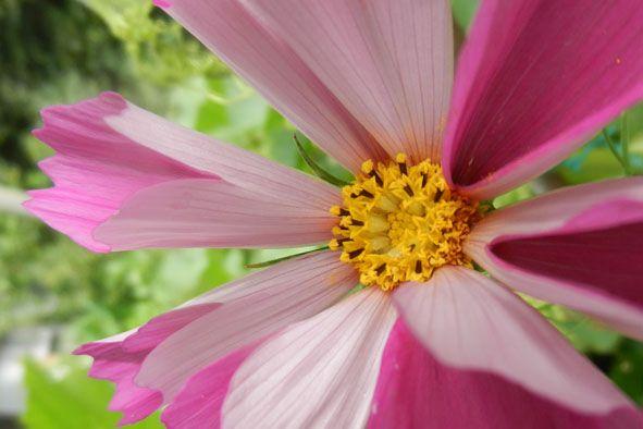 Garden flowers - Extreme closeup - 811