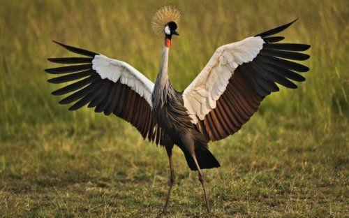 Топ-10: самые красивые птицы в мире