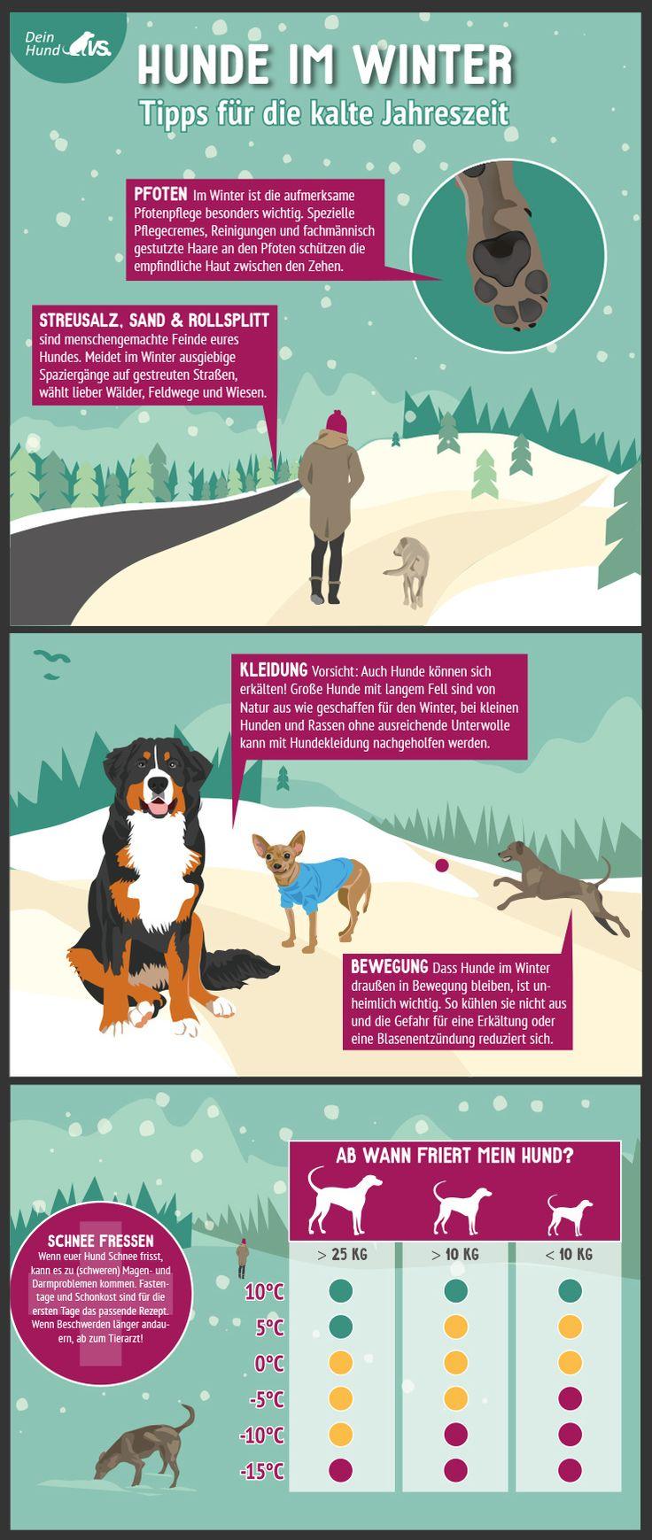 Kurze Infografik zu Besonderheiten beim Hund im Winter | www.hundeurlaub.de