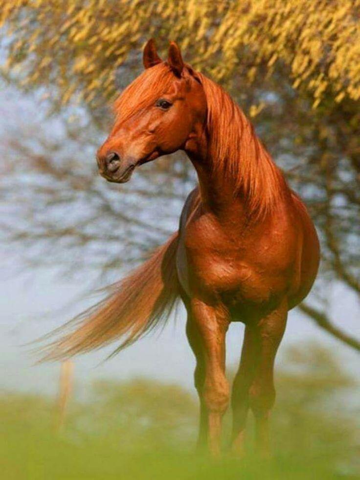 #HORSE##ANIMALS#