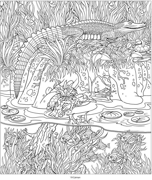 creative haven amazon animals a coloring book with a hidden picture twist by jan sovak coloring page 4 coloring pinterest coloring hidden pictures - Amazon Coloring Book