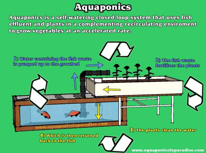 Ibc aquaponics sketch up google search marine and for Aquaponics aeration