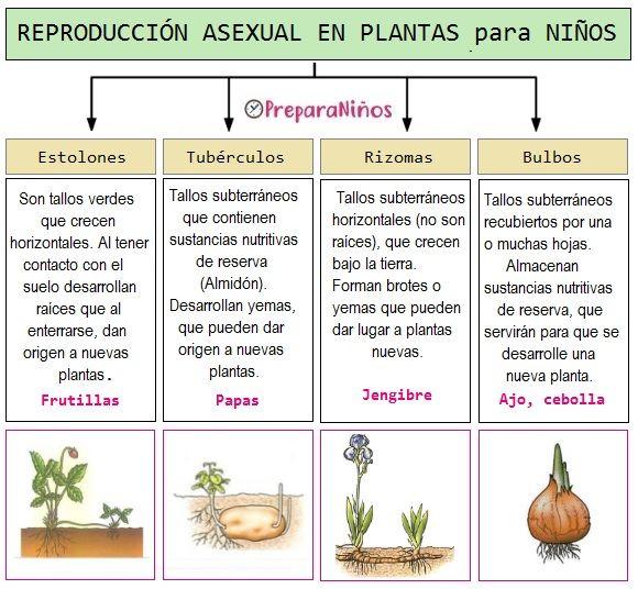 Pin En Las Plantas Partes Y Características