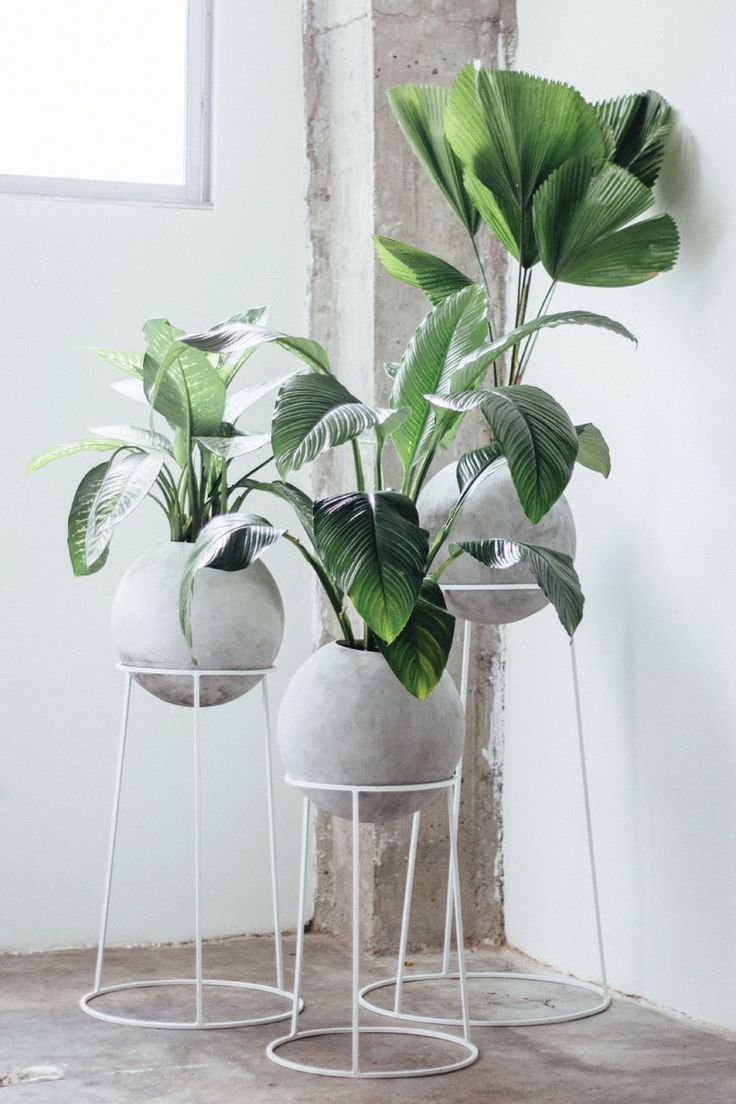 Orbed Concrete Planters Plant Stand Indoor Garden Rack Diy Plant Stand