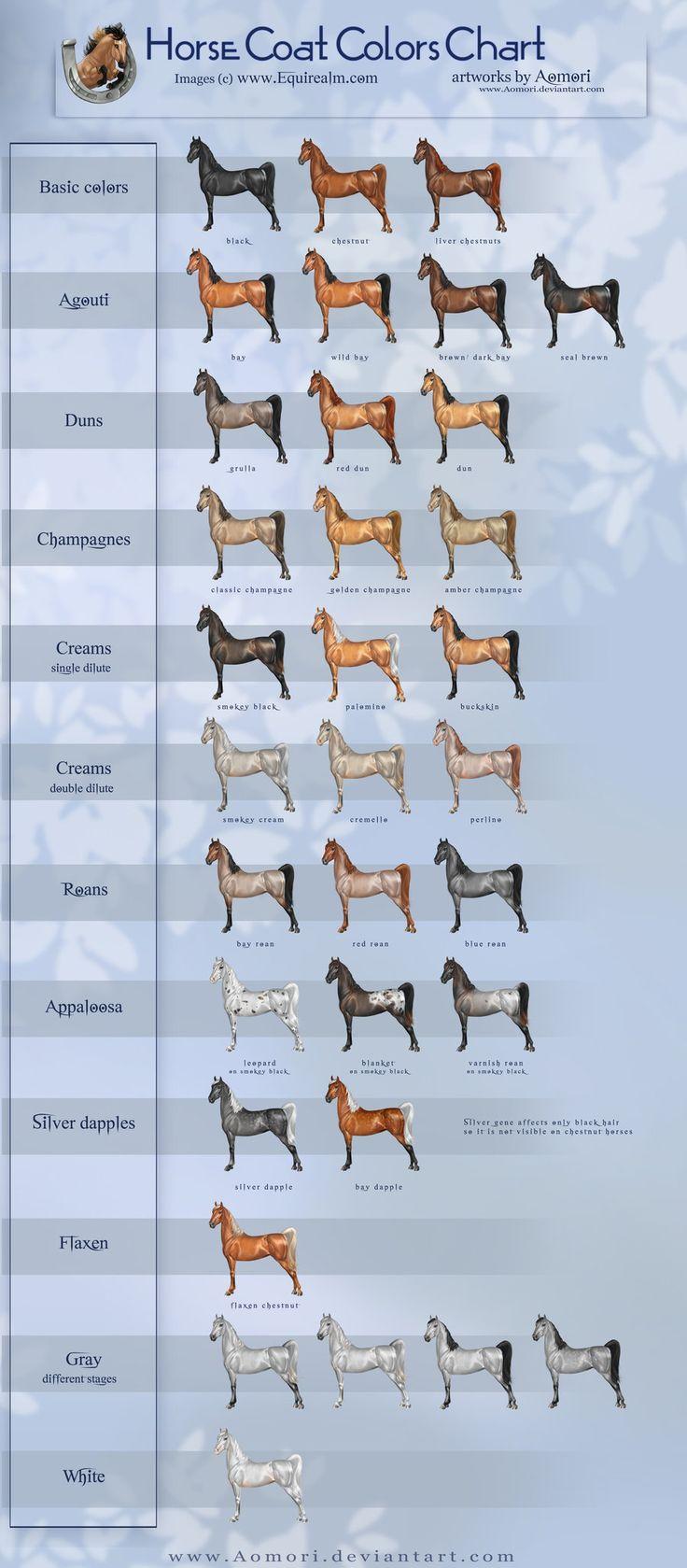 Equine Coat Color | Horse coat colors chart by Aomori on deviantART
