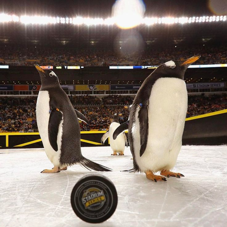 "40.6k Likes, 236 Comments - Pittsburgh Penguins (@penguins) on Instagram: ""The gang's all here. #StadiumSeries"""