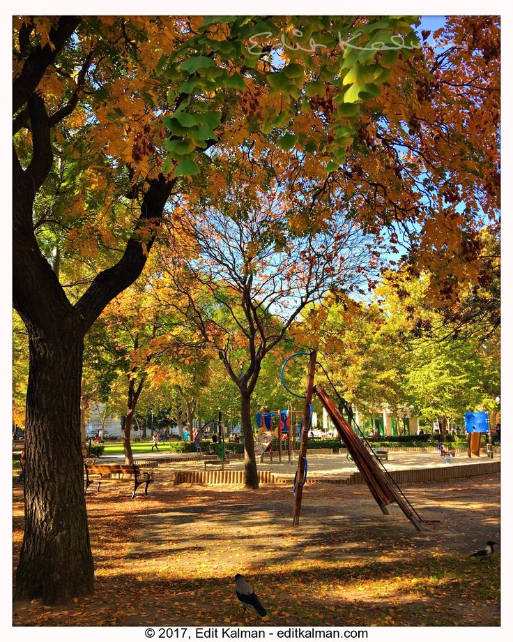 The love of alone #Alone, #Autumn, #Budapest, #Colors, #Fall, #Light, #Love, #Nature, #Park, #Playground, #Quote, #Tree - https://goo.gl/QjdivM