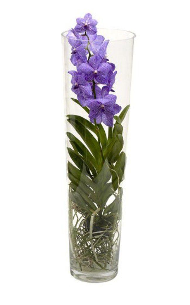 Comment S Occuper D Orchid E L 39 Atelier Des Fleurs For Comment S