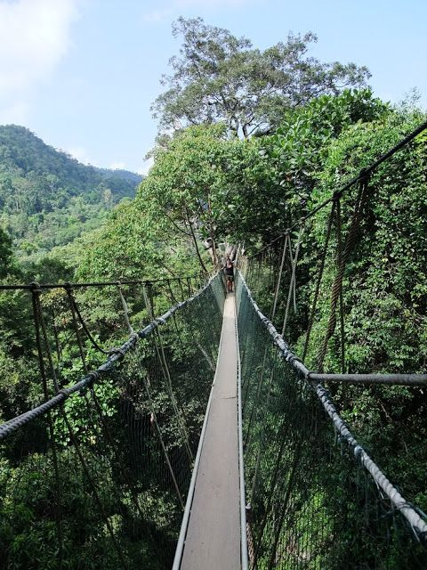 Taman Negara in Malaysia | Stunning Places #Places