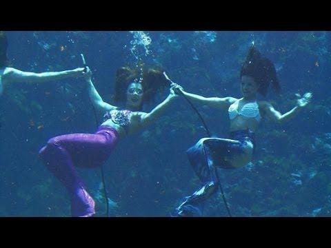 214 best images about Weeki Wachee Springs Home of the ... |Meet Weeki Wachee Mermaids