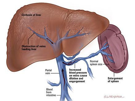 liver and spleen relationship