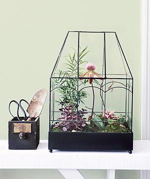 great terrarium ideas