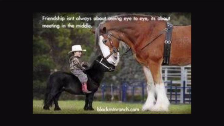 Horse Saying Happy Birthday | Funny horse quotes and sayings - YouTube