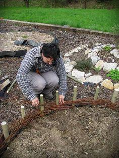 Création d'une bordure de saule dans le jardin - tissent des petites branches de saule souple autour des grosses branches jalonnés dans le sol.
