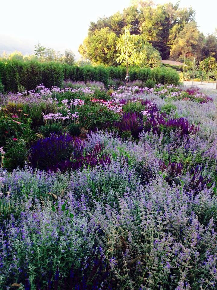 25 best ideas about purple perennials on pinterest for Perennial border design plans