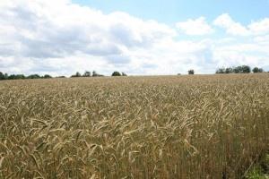 Über 860.000 Hektar ökologisch bewirtschafte Flächen in Deutschland - das sind aber tatsächlich nur etwas über 5% der kompletten Nutzfläche in Deutschland...