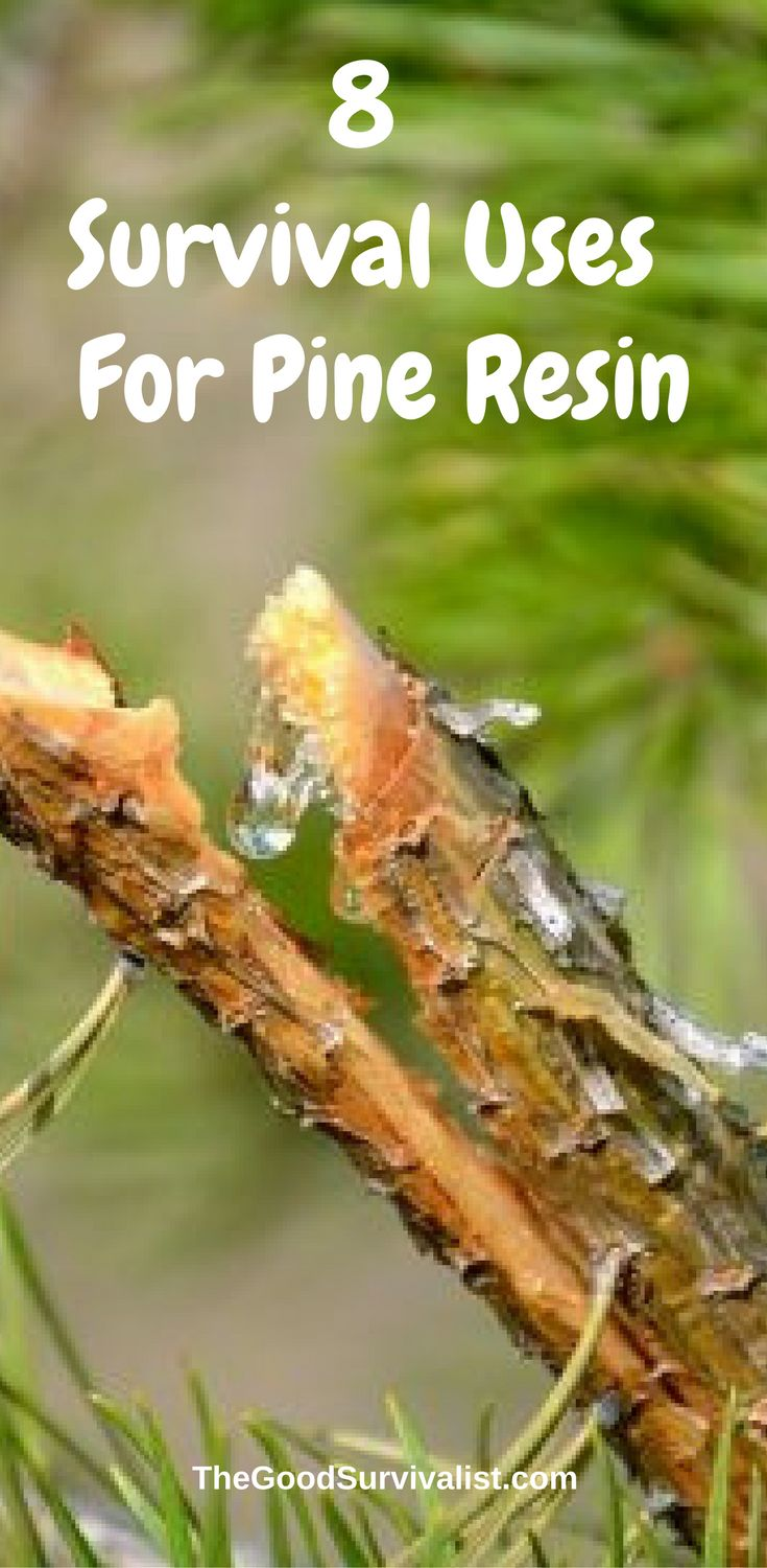 This very well done video will show you how to tap pine trees and gather sap.  You will discover the various specialty mixtures of pine sap for making things  such as tools for chewing gum, water sealants,and concrete.  http://www.thegoodsurvivalist.com/8-amazing-survival-uses-for-pine-resin/