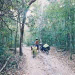Dans la 2eme plus vaste #forêt tropicale du continent sur la piste de la cité perdue de #Calakmul.<br/>In the second largest #tropical forest of the continent on our way to the lost city of Calakmul. <br/>#bikepacking #bornwild #voyage #bicycletouring #outdoor #wilderness #avontuurxo #adventure #prendsmaroue #babyonboard #jungle #Mexico #campeche #cyclocamping #efdv #bikewander #bikeviews #cyclingtheworld