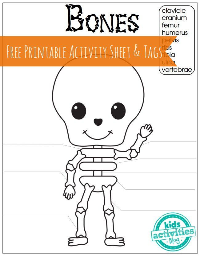 Skeleton Bones Free Printable Activity Sheet and Tags for Kids. Learn bone names