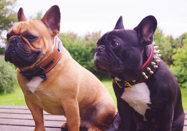French bulldog dog collar BestiaCollars