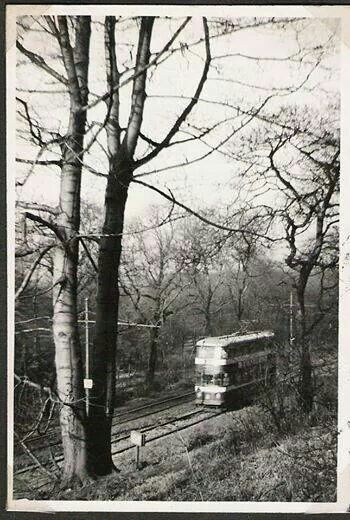 The Middleton tram on its way through the woods between Beeston and Middleton.