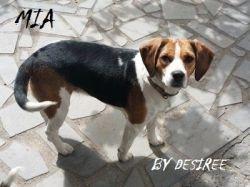 Tosse nel cane Tosse dei canili Rimedi naturali | http://elicats.it/tosse-nel-cane-tosse-dei-canili-rimedi-naturali/