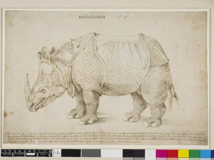 Printroom British Museum Albrecht Dürer Rhinoceros in profile to l. 1515 Pen and brown ink    watermark
