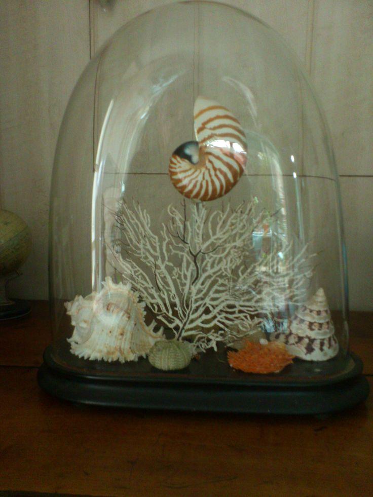 Best 25 Seashell Display Ideas On Pinterest Display Sea
