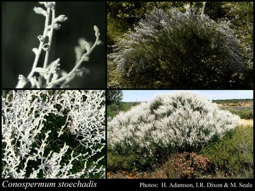 12 best australian native grasses  u0026 strappy leaved plants images on pinterest