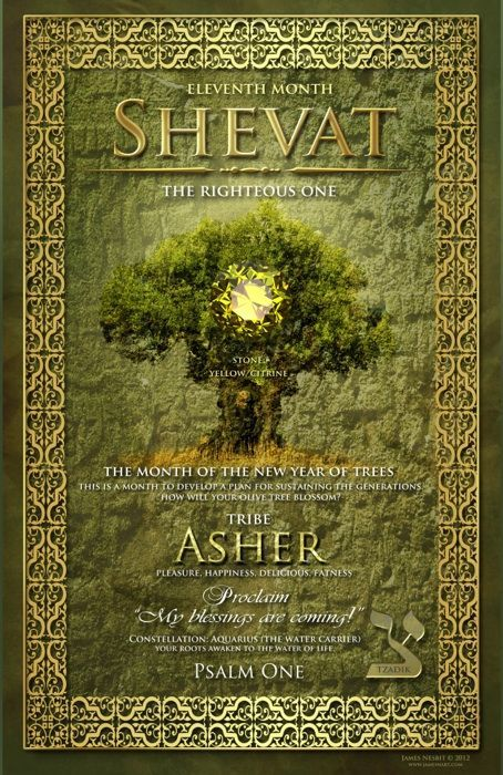 SHEVAT ~ Eleventh Hebrew Month ~ Tribe of Asher