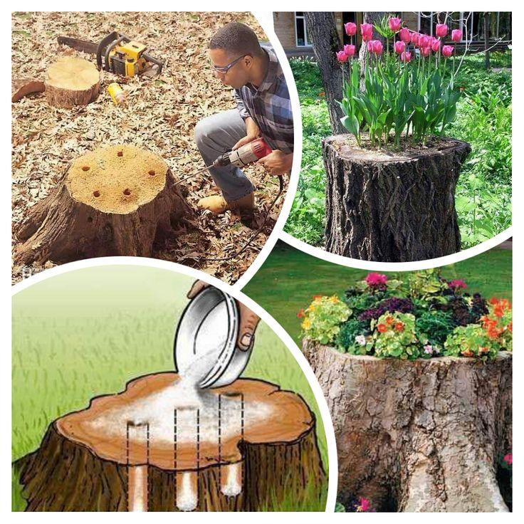 Excelente idea c mo darle nuevamente vida a estos - Troncos para jardin ...