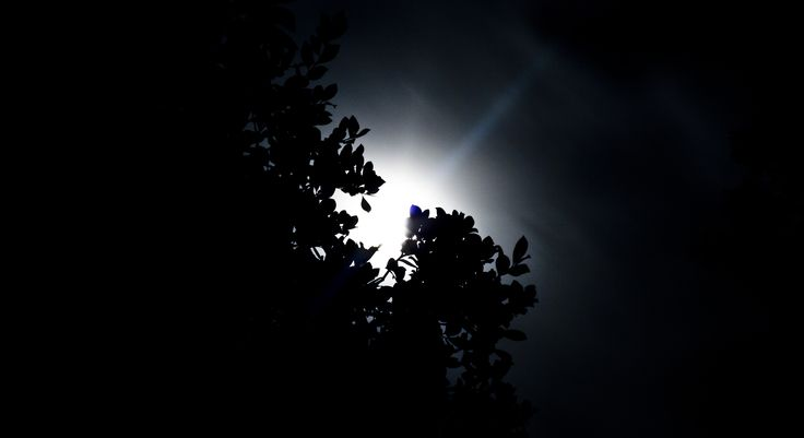 "Full moon through the trees #nightphotography - f29, 30"""