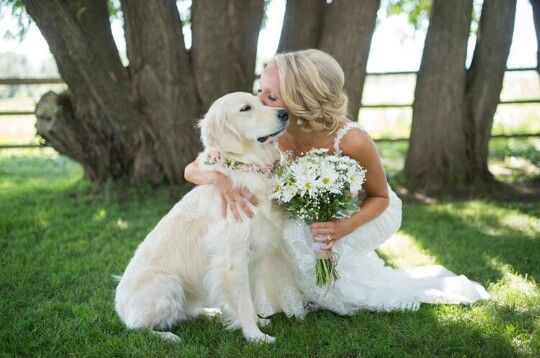 Girls Best Friend! Golden Retriever Flower Girl at our Country Wedding in Strathmore Alberta