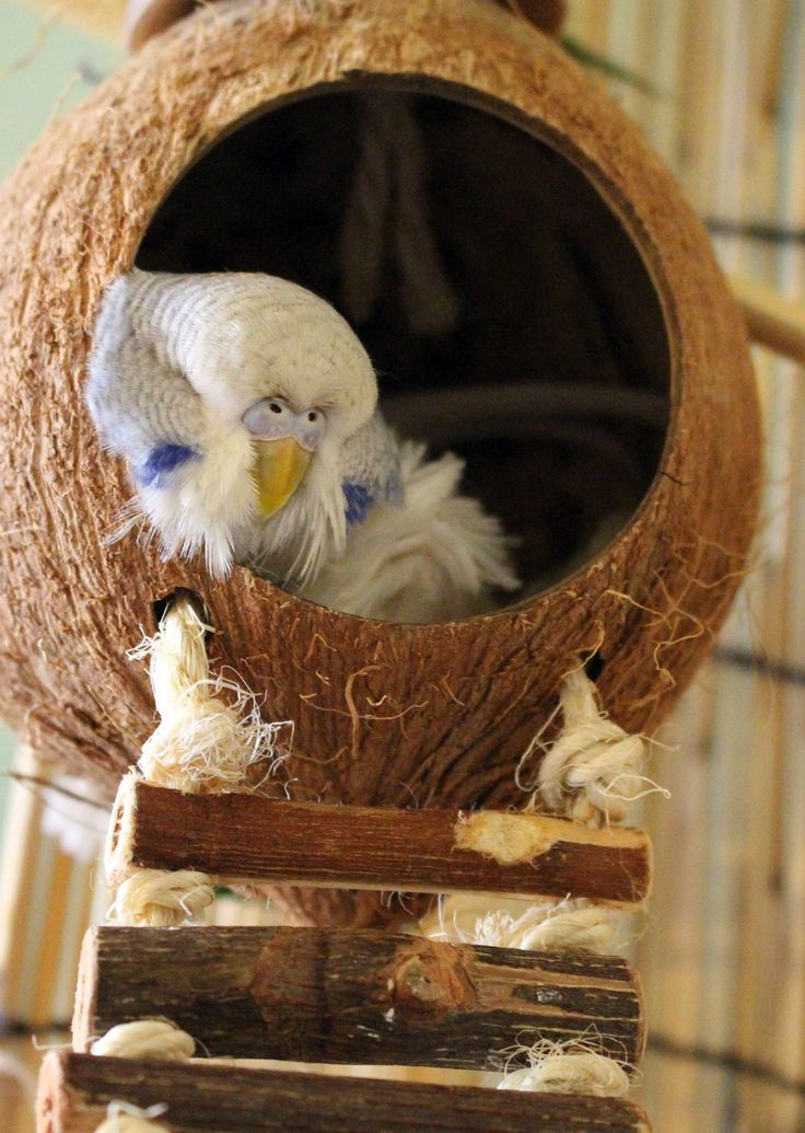 Danny Staci Cooper - You put the budgie in the coconut.