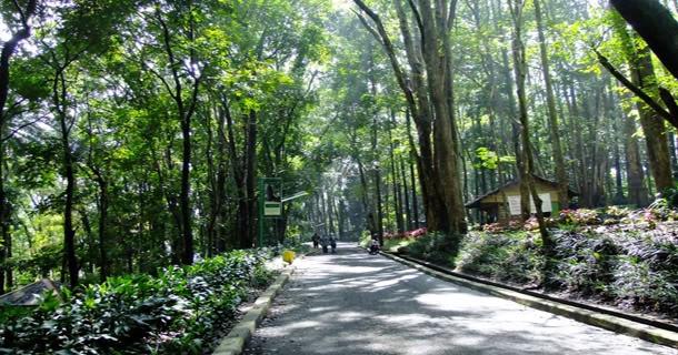Taman Hutan Raya Ir. H. Djuanda (Forest Park) #Bandung West Java