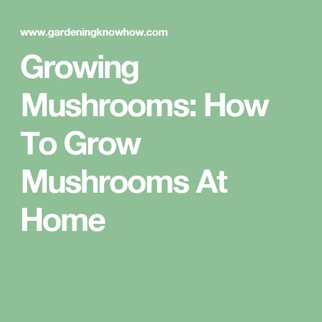 Growing Mushrooms: How To Grow Mushrooms At Home