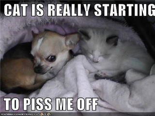 Yep! This is my grandbaby....  lololol...look at that dogs face!!! #chihuahua #chihuahuatypes #chihuahuadogs