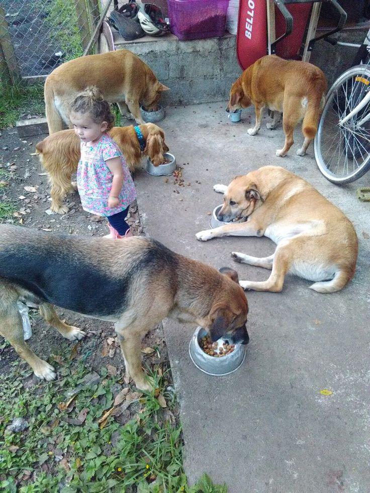 Mis perros y mi niña! Cocker Spaniel, mezcla de Pastor Alemán y criollos hermanitos.