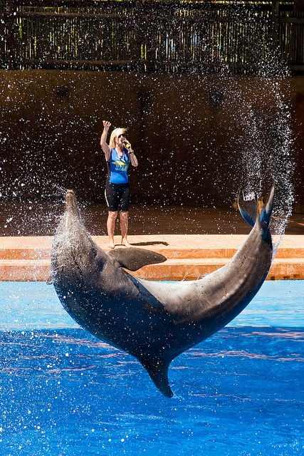 Dolphin trainer