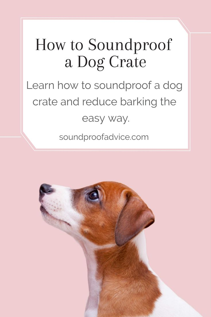 Does Your Dog Bark A Lot In His Crate Especially At Night And